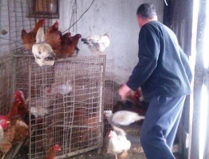 Hoţul de găini s-a ales cu dosar penal