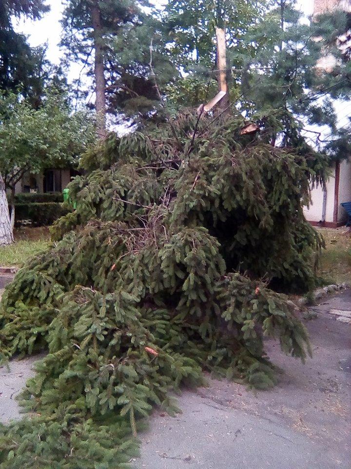Vântul puternic a rupt mai mulţi copaci, la Roşiorii de Vede