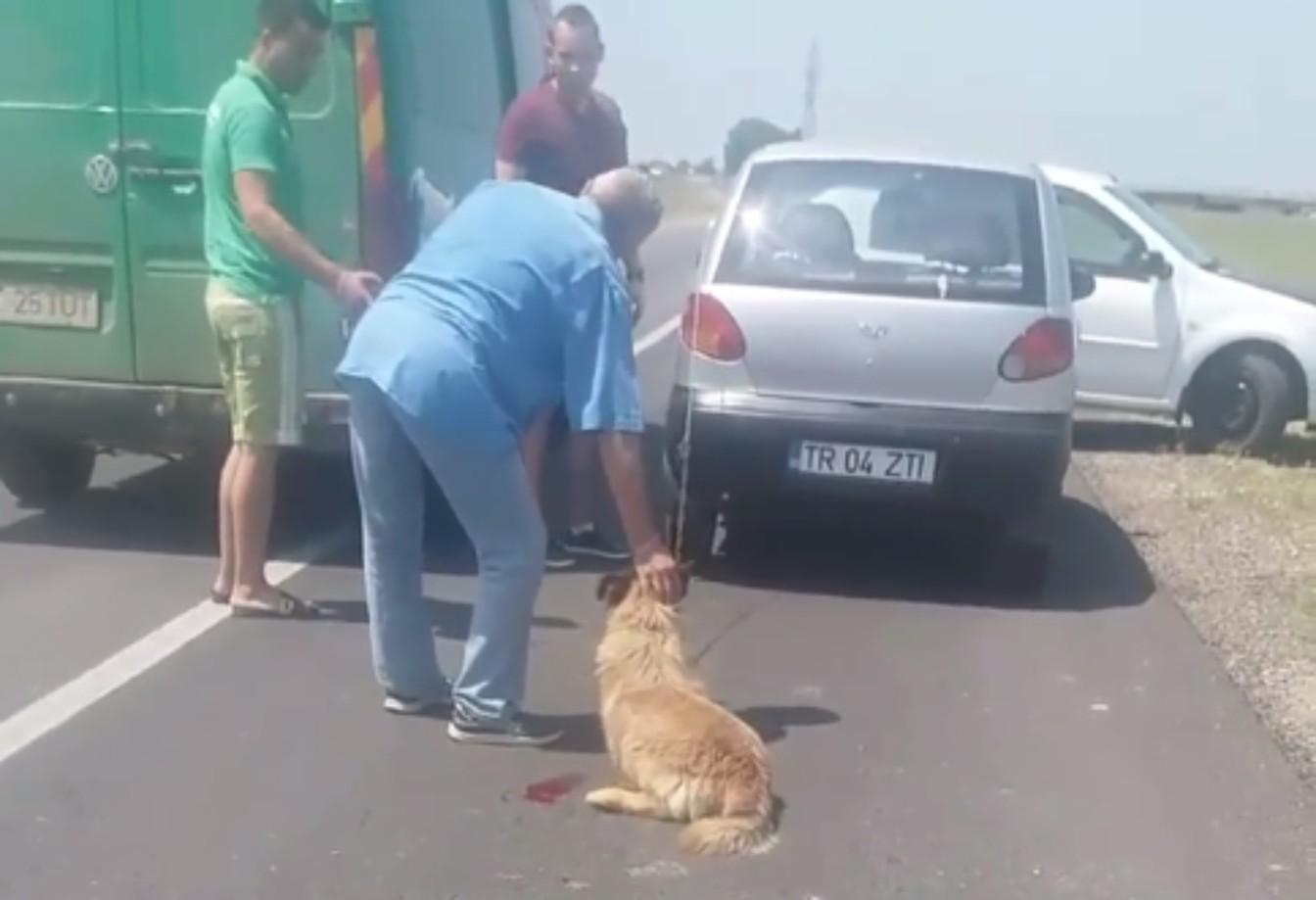 Imagini de o cruzime rară! Un bărbat de 72 de ani, acuzat că și-a torturat câinele. Ce explicații le-a dat omul polițiștilor