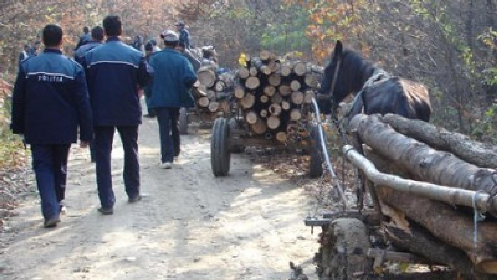 La Copăceanca se fură codrul! Hoții de lemne nu mai pot fi opriți nici cu focuri de armă