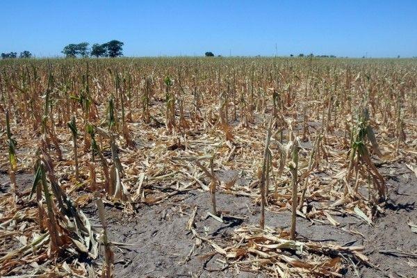 AFIR: Peste 71 milioane de euro pentru reducerea efectelor dezastrelor naturale și asigurarea producției agricole
