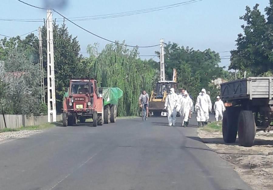 Fermierii din Teleorman afectaţi de Pesta Porcină ar putea primi bani europeni. Trei eurodeputaţi liberali cer alocarea a 80 de milioane de euro