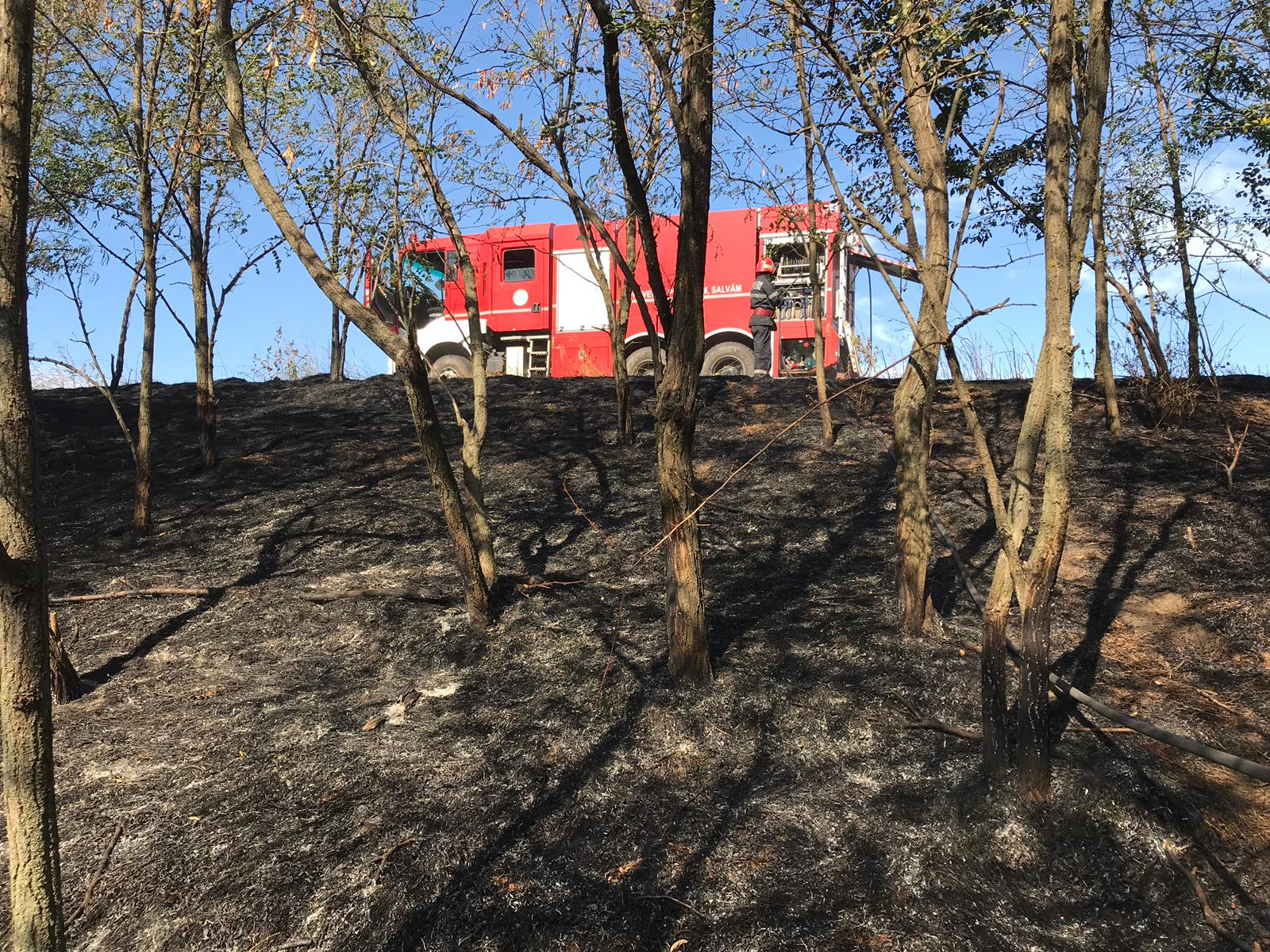 La Ţigăneşti, arde pădurea! Zeci de pompieri şi oameni din localitate acţionează pentru lichidarea focului