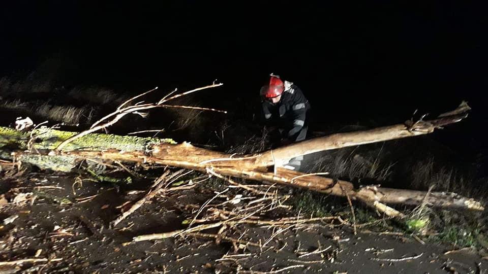 ISU Teleorman: Copaci căzuţi pe carosabil şi cabluri de electricitate rupte, din cauza vântului puternic
