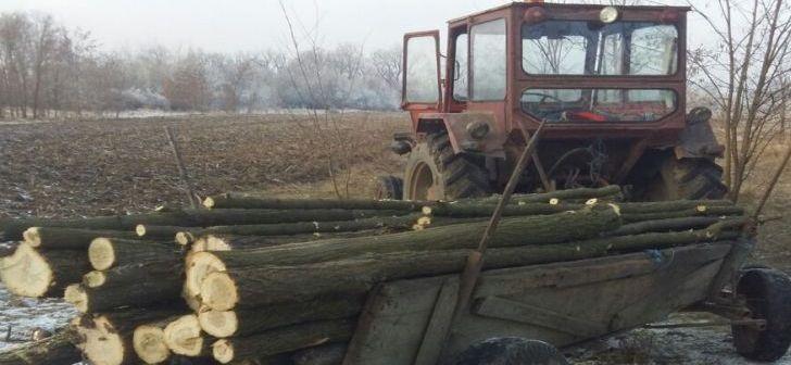 Dosar penal pentru 7 metri cubi de lemne. Un bărbat de 56 de ani, din Scurtu-Mare, prins în flagrant